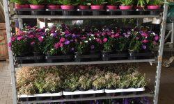 Voorraad Najaarsplanten