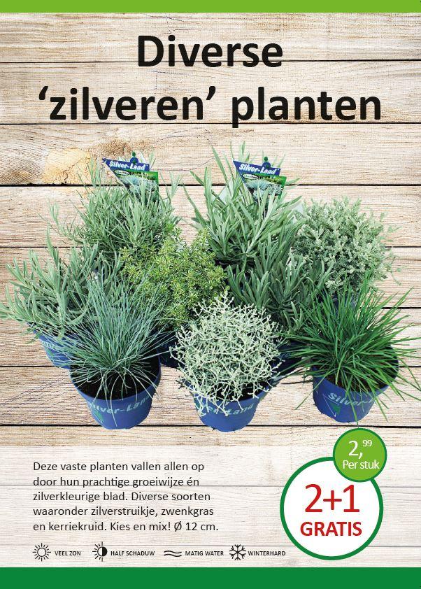 zilveren-planten-divers