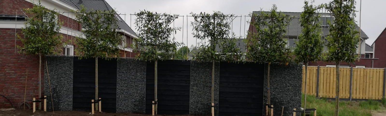 Leibomen en haagplanten op maat voor uw tuin