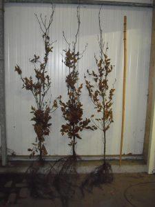 diverse-haagplanten